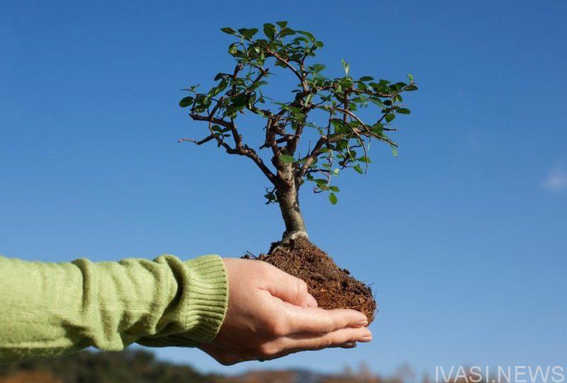 день дерева дерево природа одесса новости одессы одесские новости