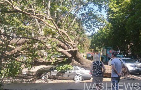 в Одессе упало дерево